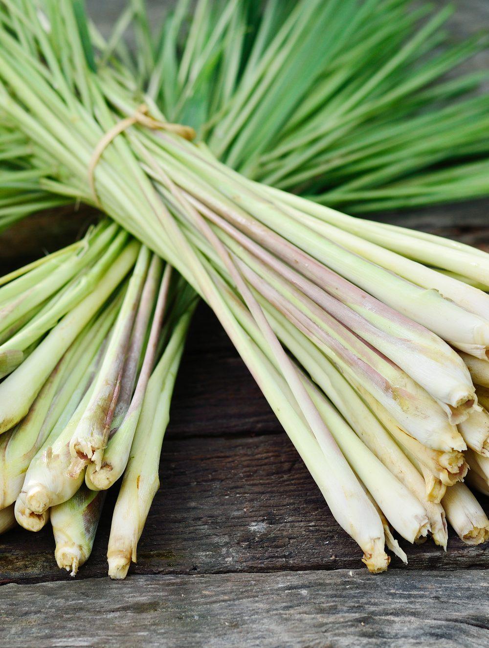 rhoot lemongrass energizing herbal tea recipe